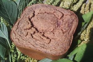 Хлеб из амаранта